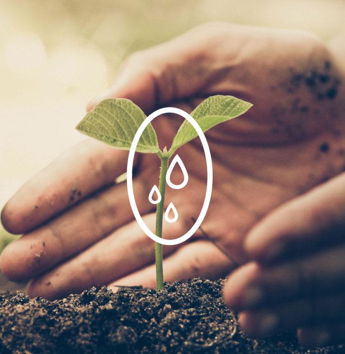 tonet genova cura delle piante
